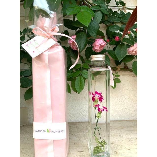 ナデシコ 花咲くハーバリウム 花、ガーデニング ハーバリウム (44693)|kagoen-nursery|06