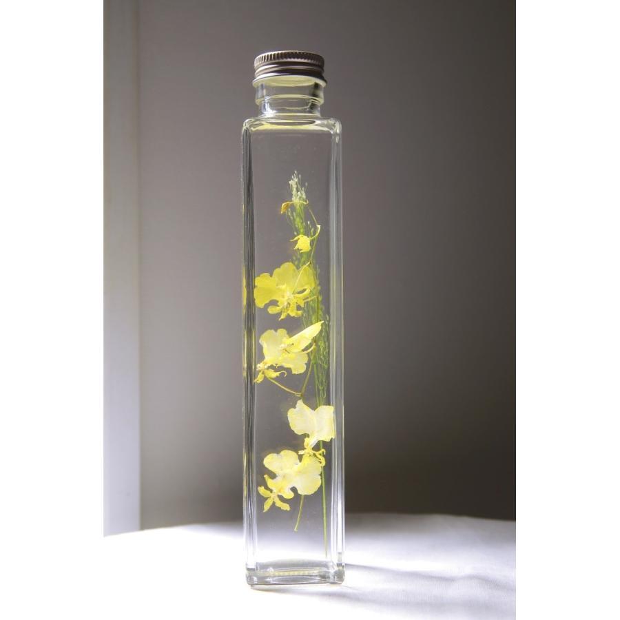 オンシジューム 花咲くハーバリウム 花、ガーデニング ハーバリウム (44693)|kagoen-nursery
