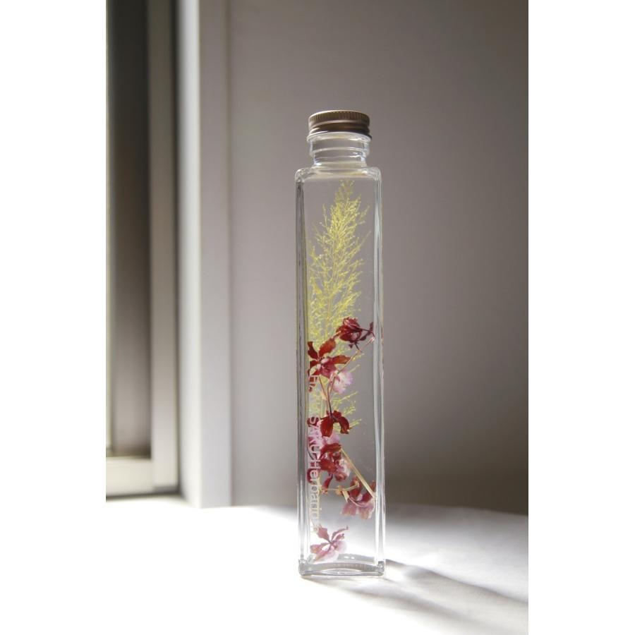オンシジューム「シャリーベイビー」花咲くハーバリウム 花、ガーデニング ハーバリウム (44693) kagoen-nursery