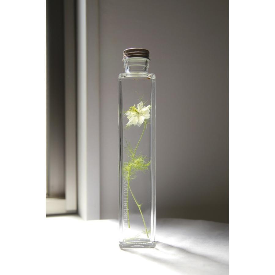 ニゲラ 花咲くハーバリウム 花、ガーデニング ハーバリウム (44693)|kagoen-nursery