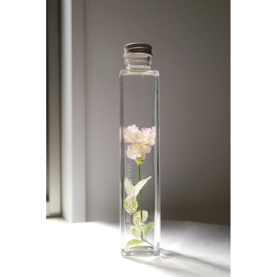 カーネーション 花咲くハーバリウム|kagoen-nursery