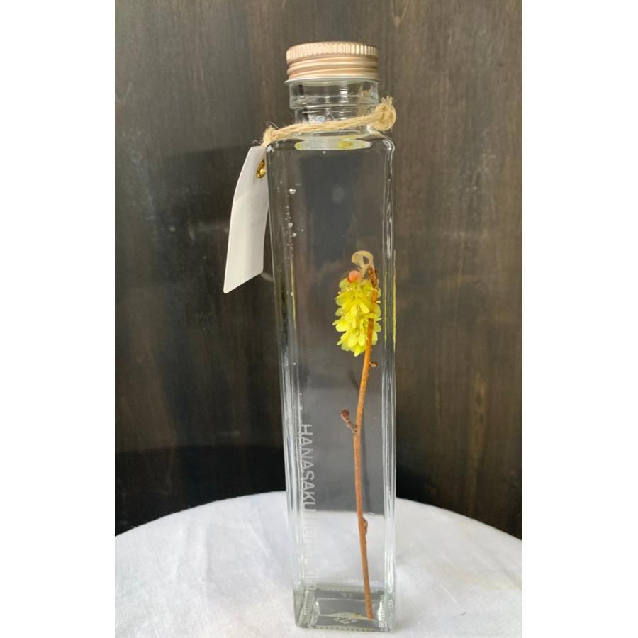 トサミズキ 花咲くハーバリウム 花、ガーデニング ハーバリウム (44693)|kagoen-nursery|02