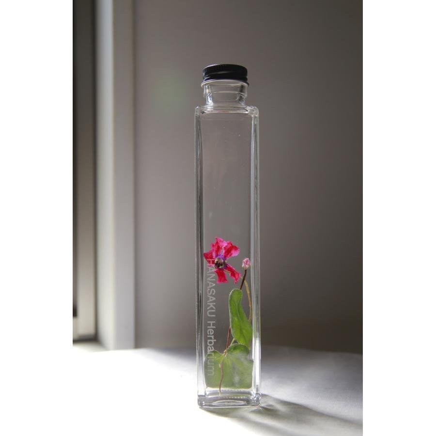 シクラメン 花咲くハーバリウム|kagoen-nursery