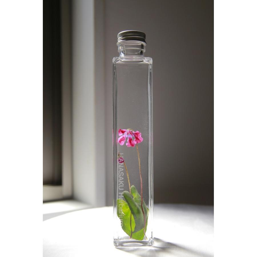 シクラメン 花咲くハーバリウム kagoen-nursery
