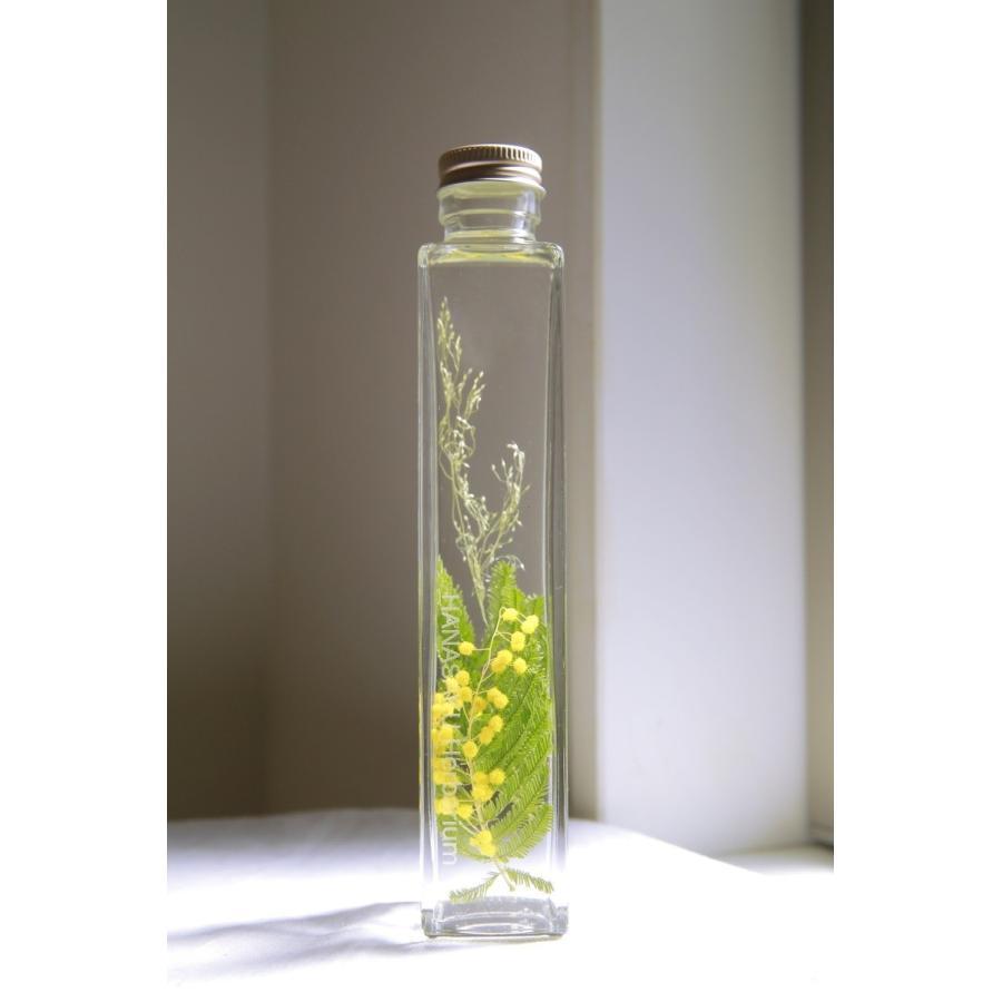 ミモザ 花咲くハーバリウム  kagoen-nursery