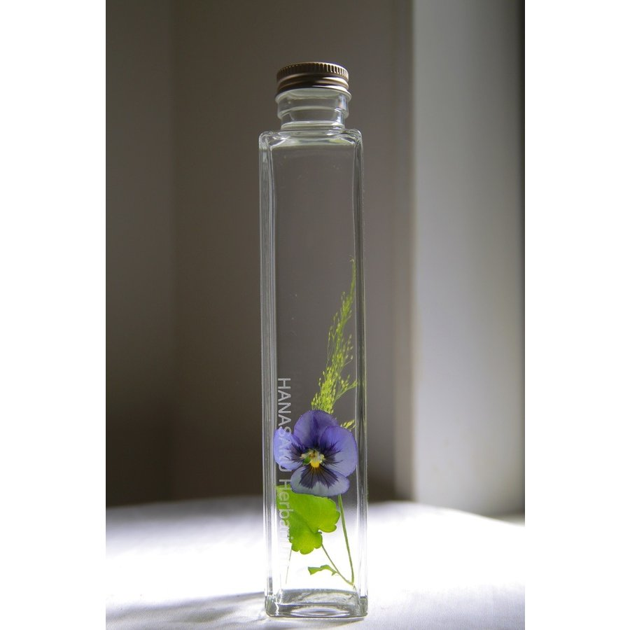 ビオラ 花咲くハーバリウム 花、ガーデニング ハーバリウム (44693)|kagoen-nursery
