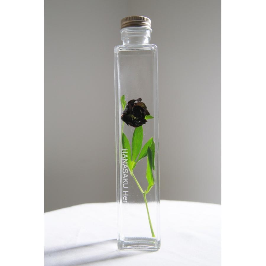 クリスマスローズ 「ブラックダブル」 花咲くハーバリウム|kagoen-nursery