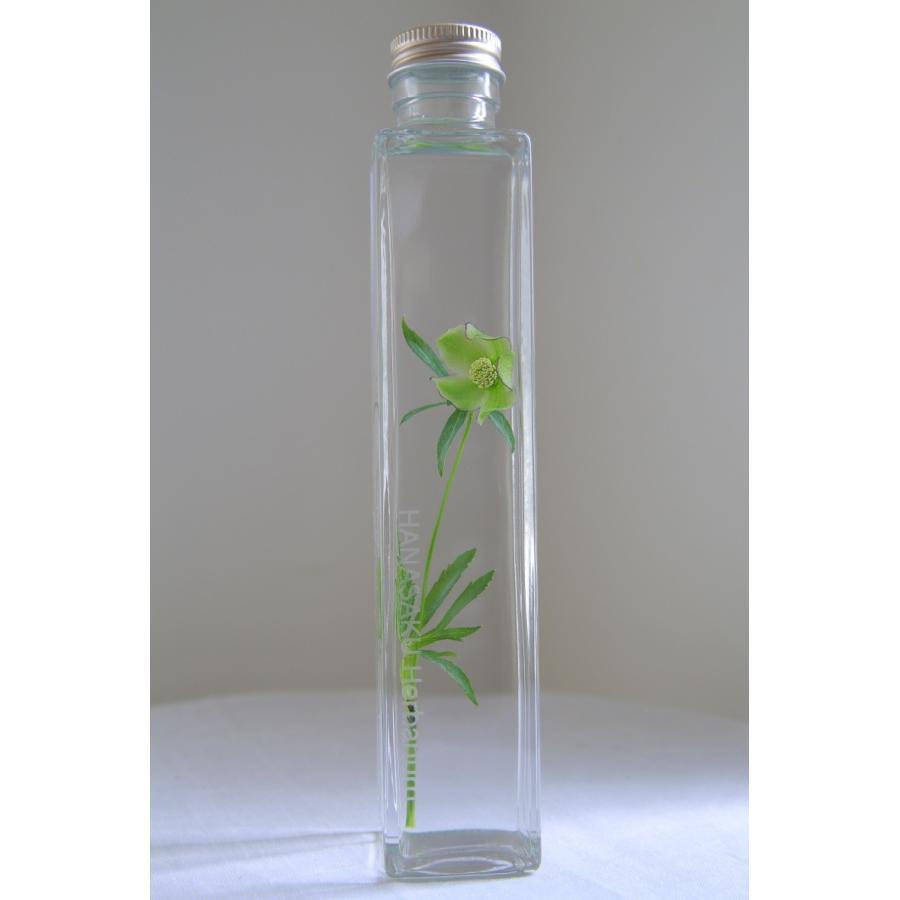 クリスマスローズ 「グリーンシングルピコ」 花咲くハーバリウム|kagoen-nursery