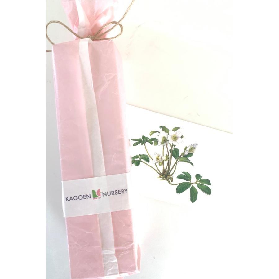 クリスマスローズ 「グリーンシングルピコ」 花咲くハーバリウム|kagoen-nursery|04