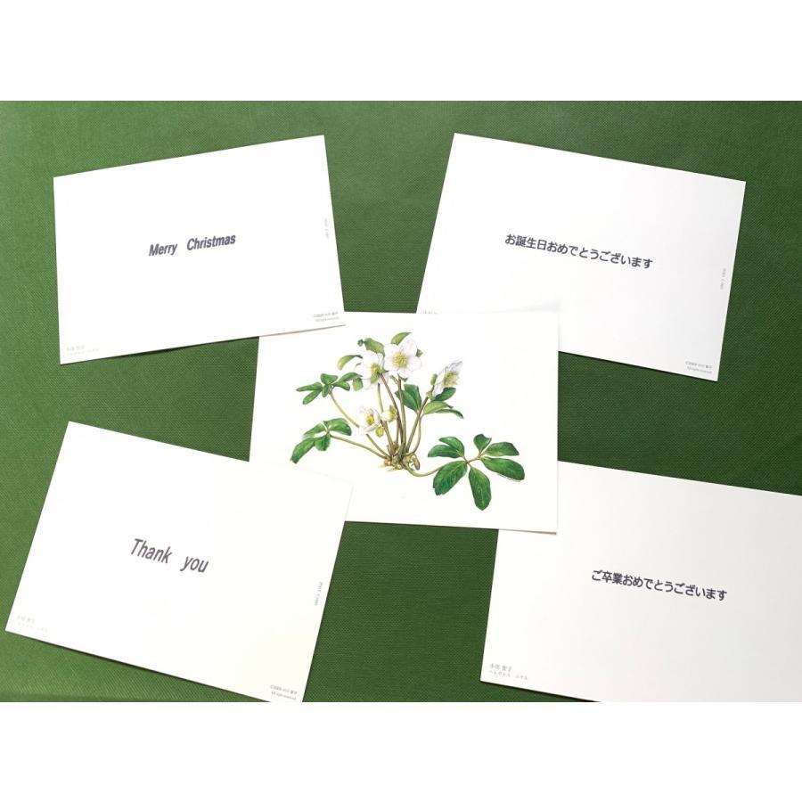 クリスマスローズ 「グリーンシングルピコ」 花咲くハーバリウム|kagoen-nursery|06