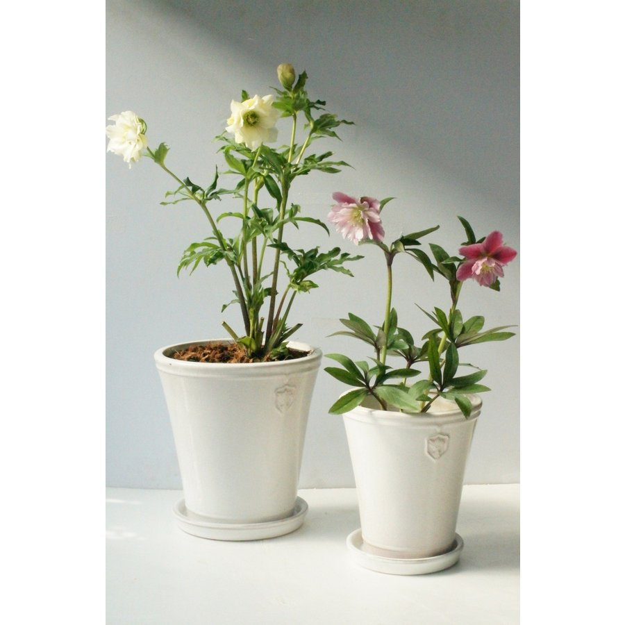 Rose  de Noel Parfaite 7号Lサイズ 花、ガーデニング 園芸用品 鉢、プランター 庭、ガーデニング 鉢、プランターカバー (4054) kagoen-nursery 06