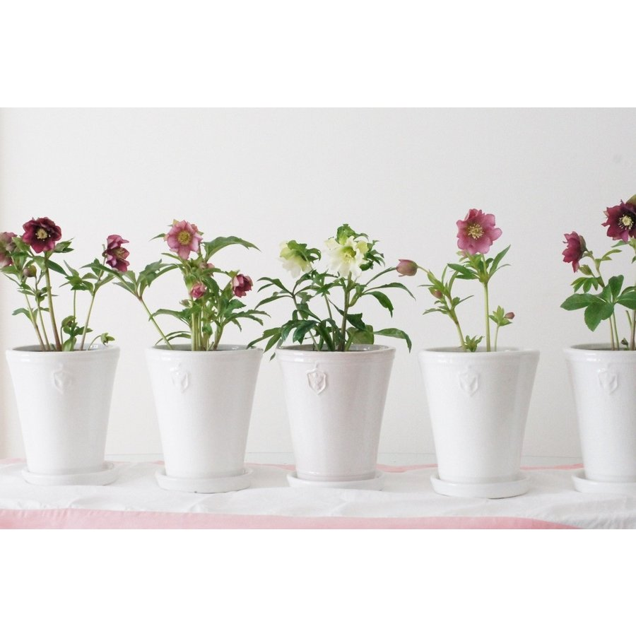 Rose  de Noel Parfaite 7号Lサイズ 花、ガーデニング 園芸用品 鉢、プランター 庭、ガーデニング 鉢、プランターカバー (4054) kagoen-nursery 09