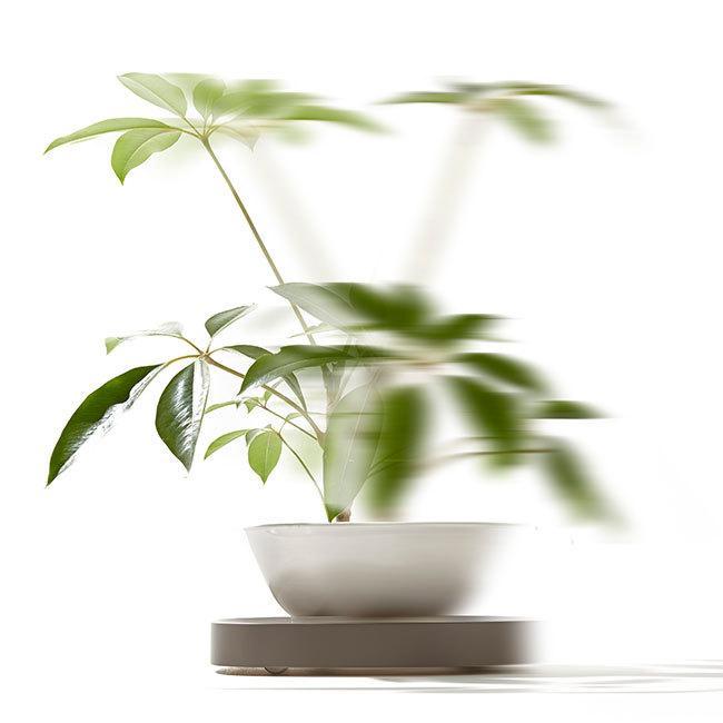 tidy プランタブル 植木鉢トレー 観葉植物 ティディ tidy テラモト グリーン 植物植物 キャスター付|kajitano|05