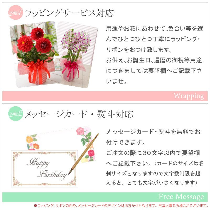 シクラメン 鉢植えギフト 5号鉢 選べる8品種 花の ギフト お歳暮 クリスマス 誕生日 プレゼント フラワーギフト kajoen 10