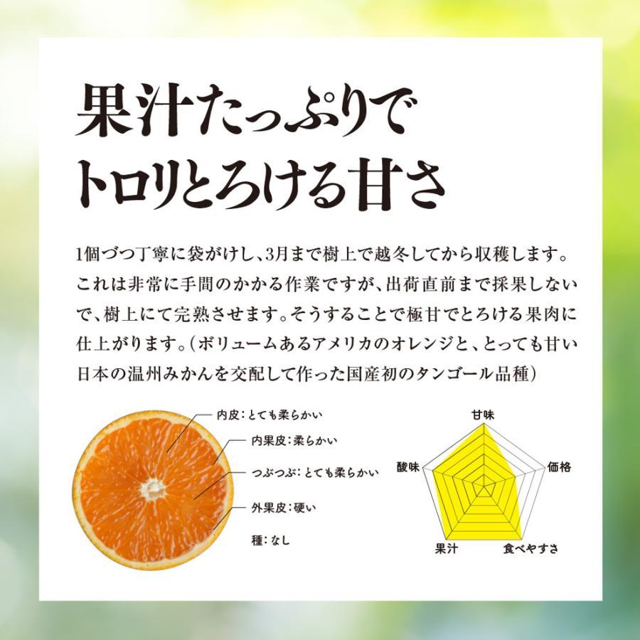 そら清見【ご予約/愛媛産みかん/訳あり】4kg kajuensora 02