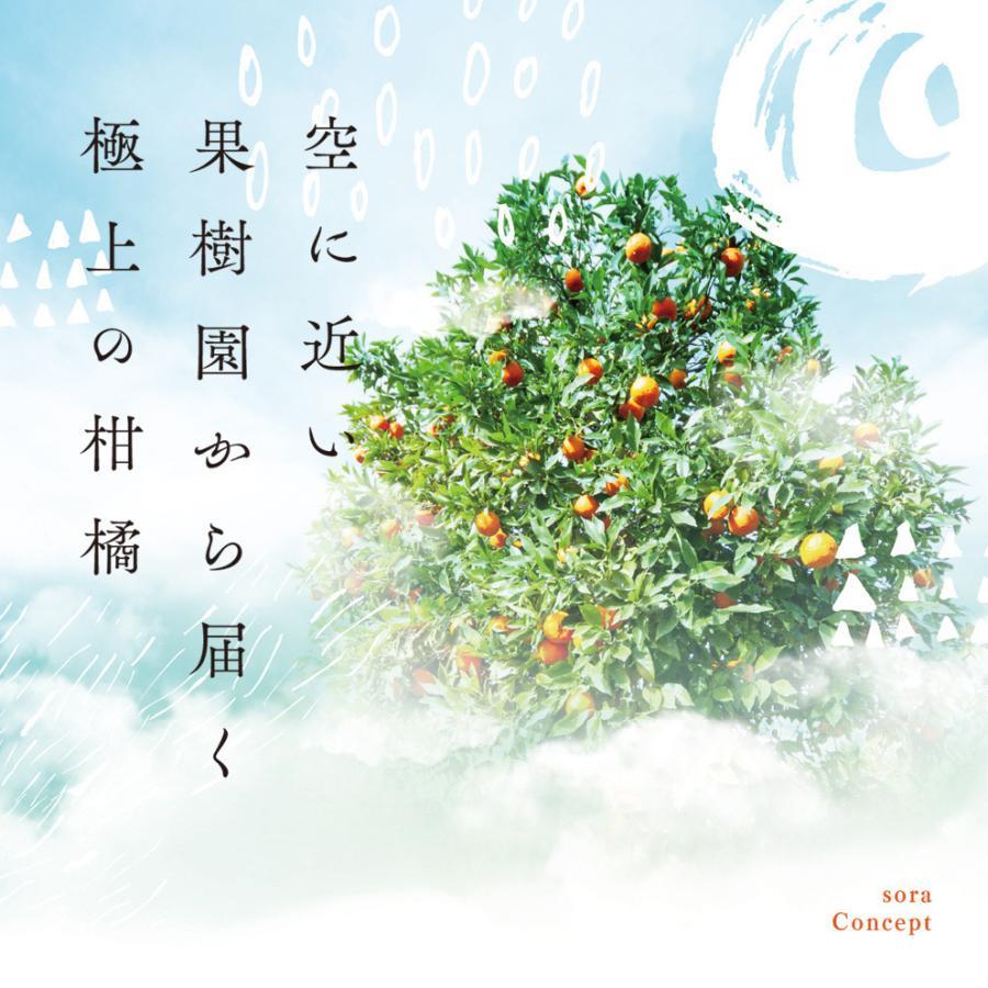 そら清見【ご予約/愛媛産みかん/訳あり】4kg kajuensora 03