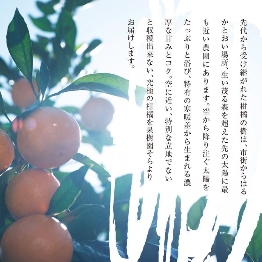 そら清見【ご予約/愛媛産みかん/訳あり】4kg kajuensora 04