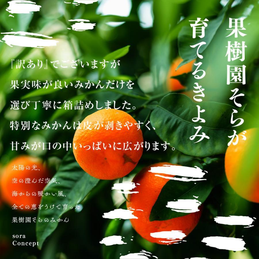そら清見【ご予約/愛媛産みかん/訳あり】4kg kajuensora 05