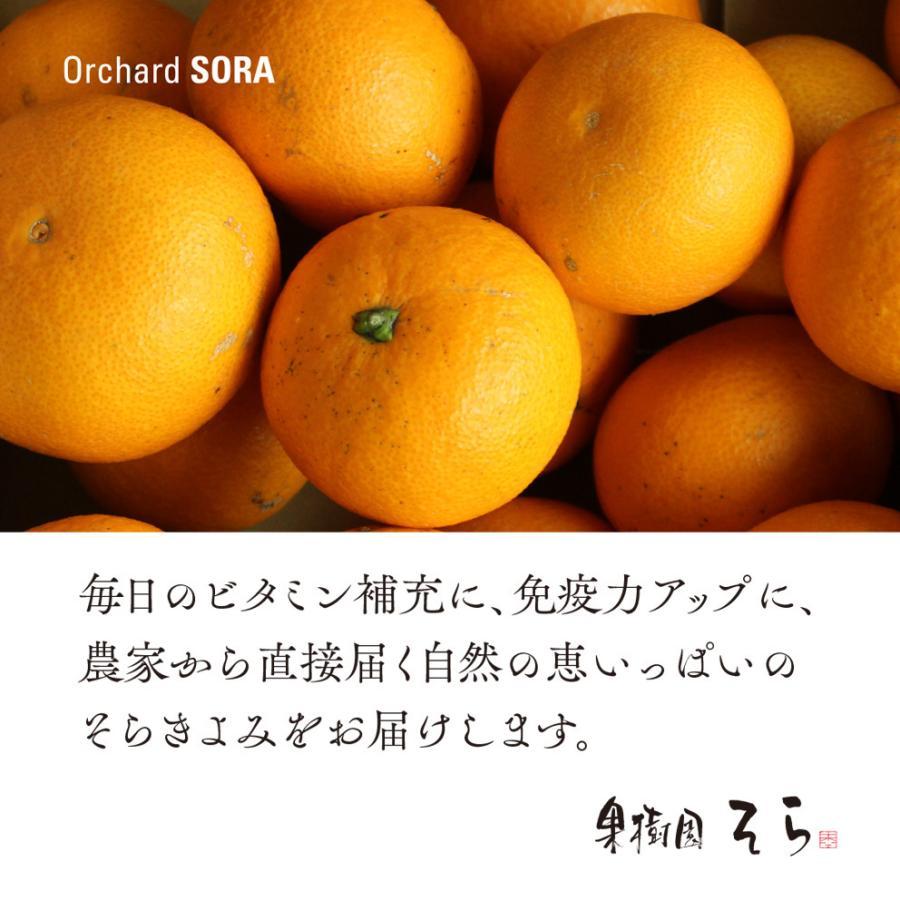 そら清見【ご予約/愛媛産みかん/訳あり】4kg kajuensora 07