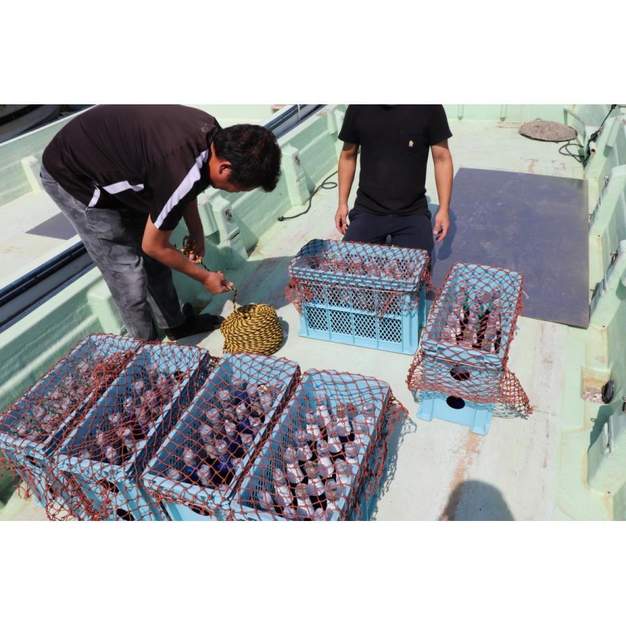 牡蠣と共に育つ酒2021(純米吟醸海中熟成酒1本+寄島産殻付牡蠣約1kg) 【12月下旬頃から蔵出し開始!】|kamikokoro|08