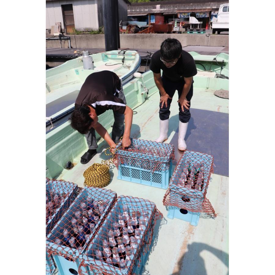 牡蠣と共に育つ酒2021(純米吟醸海中熟成酒1本+寄島産殻付牡蠣約1kg) 【12月下旬頃から蔵出し開始!】|kamikokoro|09