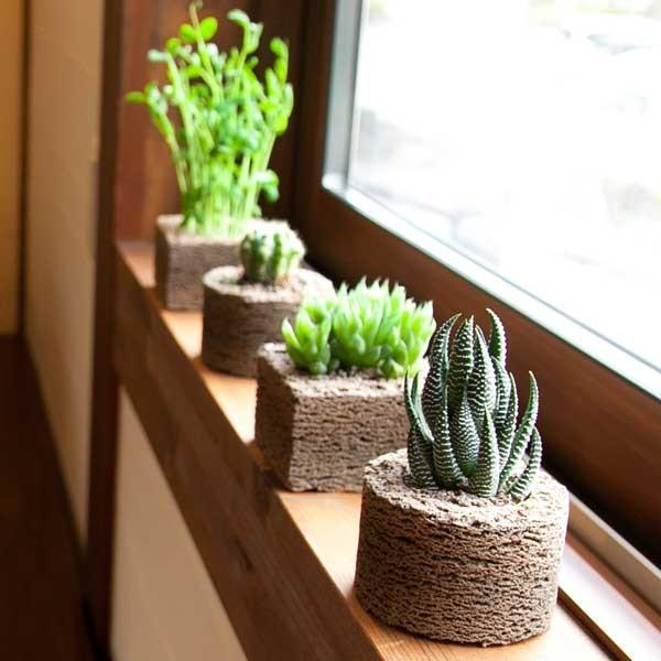 ≪トーケン≫窓際のポットちゃん 丸型 kanazawa-honpo 04