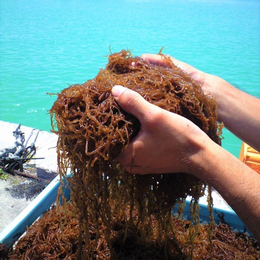 もずく 沖縄県石垣島産 味付けもずく1kg×4個 もずく酢 フコイダン 送料無料 海藻|katsusuisanmozuku|02