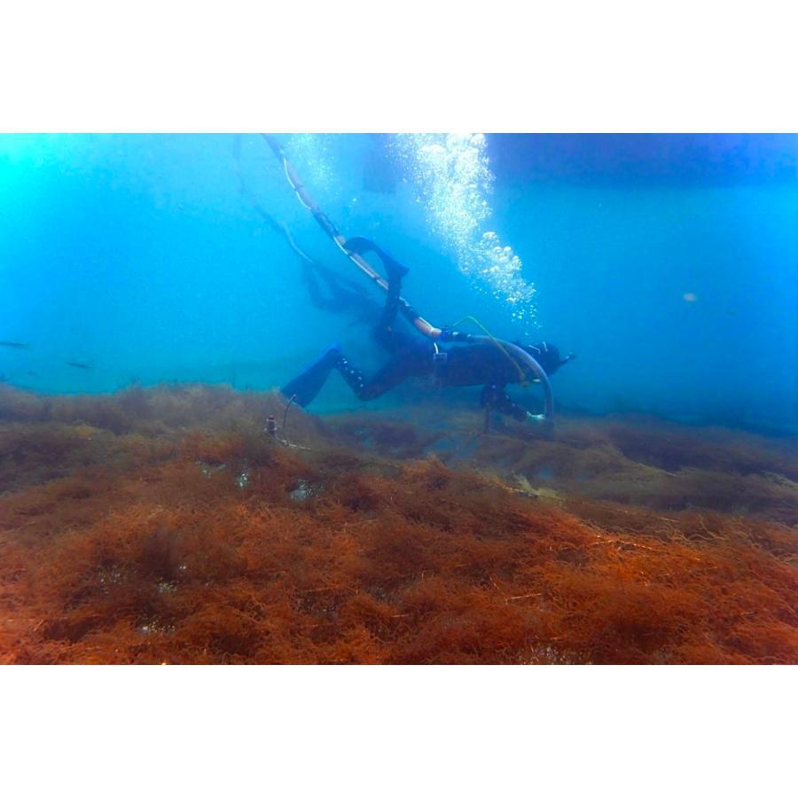 もずく 沖縄県石垣島産 味付けもずく1kg×4個 もずく酢 フコイダン 送料無料 海藻|katsusuisanmozuku|07