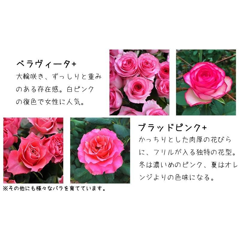 花 誕生日プレゼント 女性 男性 母 バラ フラワーアレンジメント 結婚記念日 退職祝い 退院祝い ギフト 送料無料 20代 30代 40代 50代 60代 70代 80代 90代|kawata-baraen|13