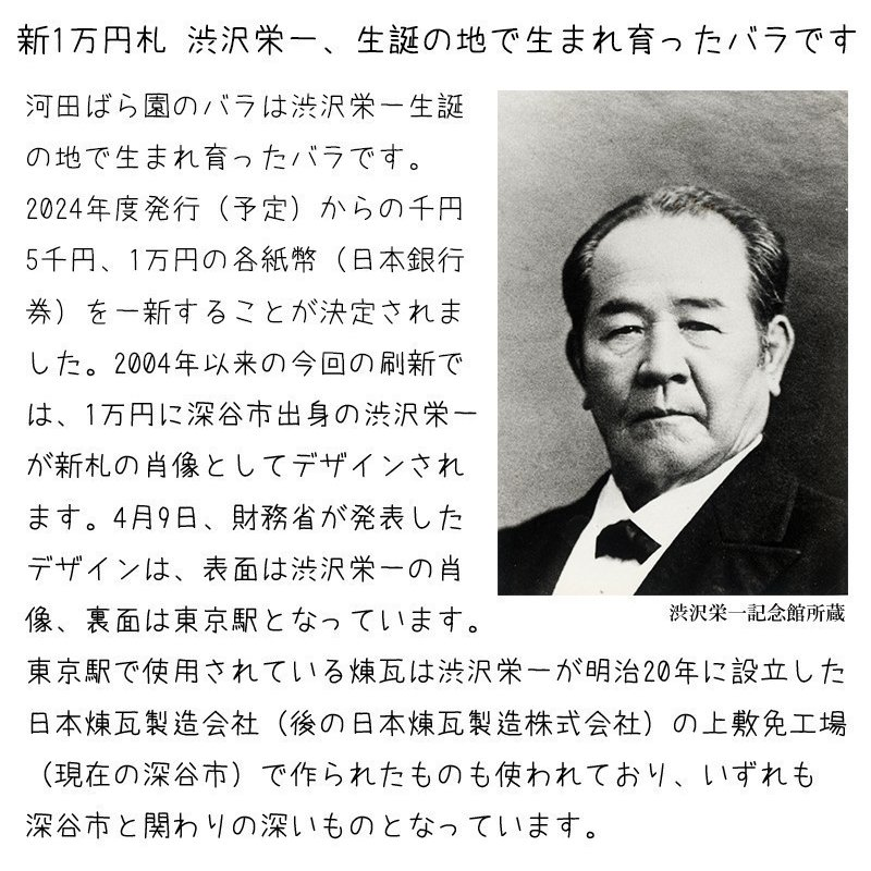 花 誕生日プレゼント 女性 男性 母 バラ フラワーアレンジメント 結婚記念日 退職祝い 退院祝い ギフト 送料無料 20代 30代 40代 50代 60代 70代 80代 90代|kawata-baraen|17