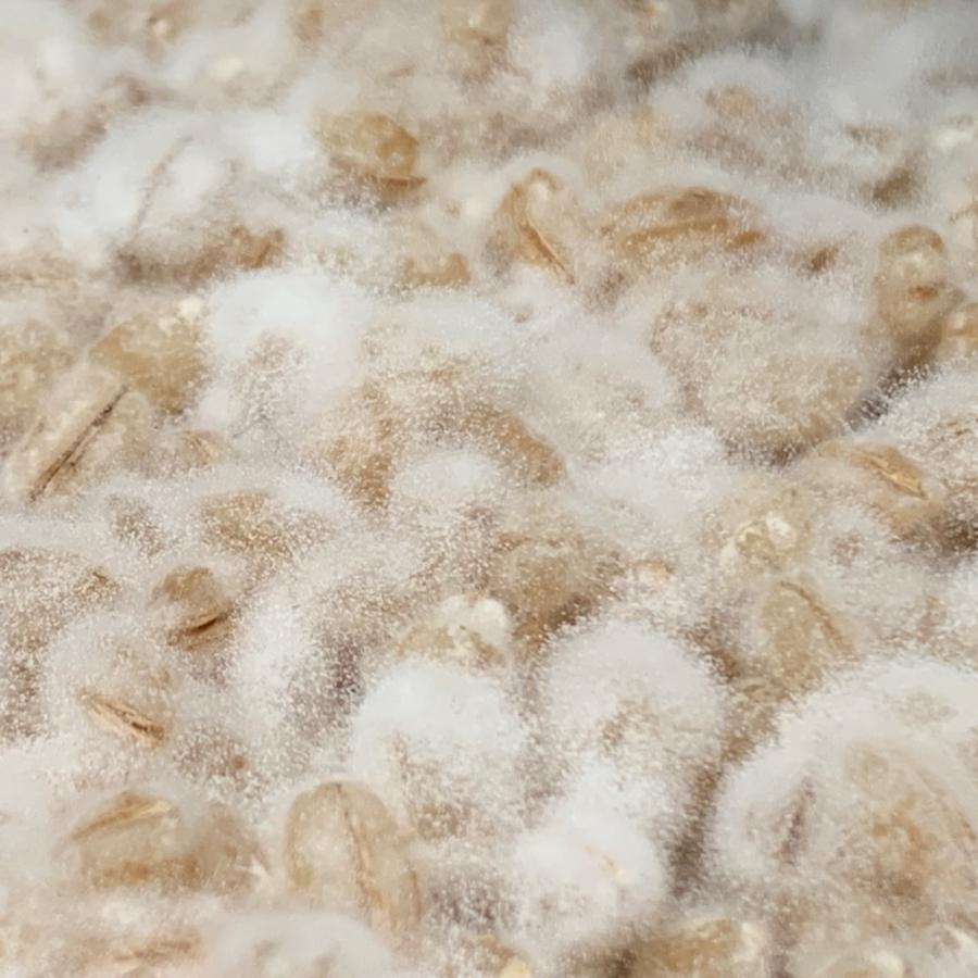 【クール便】手作り味噌セット 麦味噌5.4kg(約5.2〜5.4kg 生麦麹・無添加・九州産) 味噌作りセット キット|kawazoesuzou|05