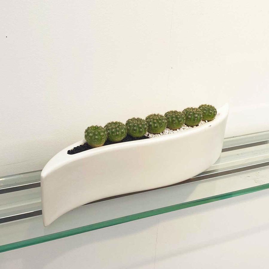 サボテンの寄せ植え おトク G-08 観葉植物 インテリア 多肉植物 玉サボテン 育てやすい 種類 一覧 送料無料 サボテン 安値
