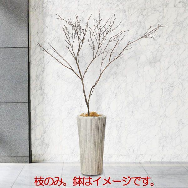 国産 ドライ素材 ツバキ 大枝 全長2.0m 特大 変木 ヘンぼく 枝物 枝もの 枝 ブランチ 人工観葉植物 造花 花材 アレンジ