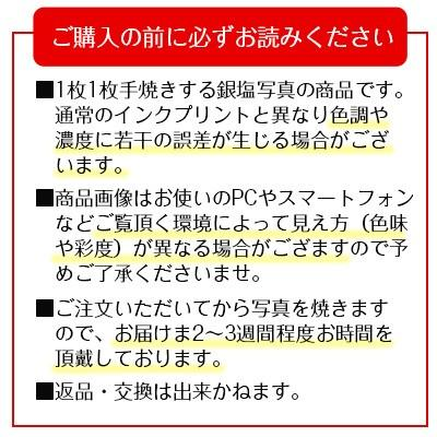 秋元隆良  金龍カード特典付   金龍 代引き不可|kenkami|10