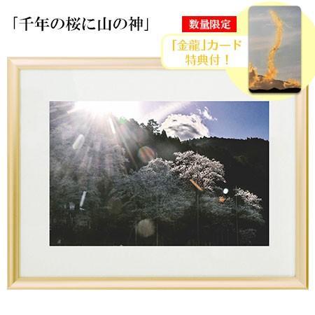 秋元隆良  金龍カード特典付   千年の桜に山の神 代引き不可|kenkami