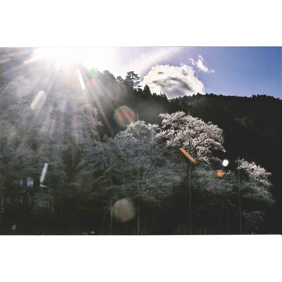 秋元隆良  金龍カード特典付   千年の桜に山の神 代引き不可|kenkami|03