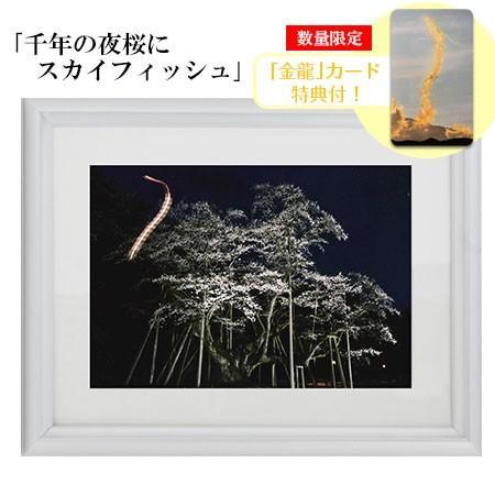 秋元隆良  金龍カード特典付  2L版 千年の夜桜にスカイフィッシュ 代引き不可|kenkami