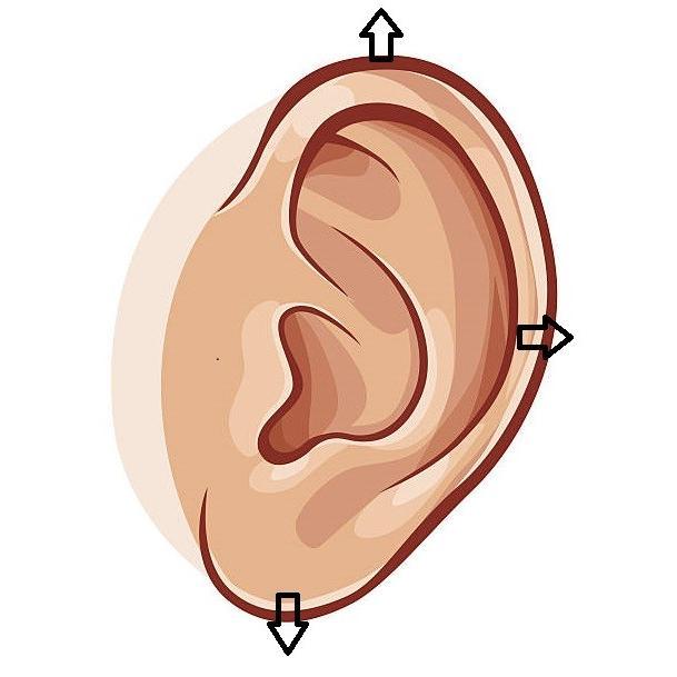 通信講座 コロナウイルス対策 たった3分で免疫力を上げる耳ヨガリフレ |kenkou-mimitsubo|06