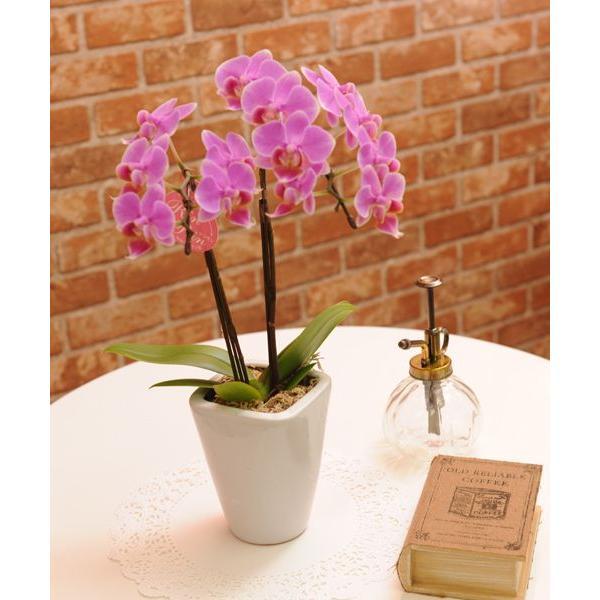 明日贈れる テーブル胡蝶蘭|kihana-shop|05