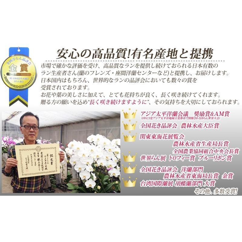胡蝶蘭ランキング1位 3本立ち 明日贈れる 贈答用 お祝い ギフト お供え|kihana-shop|04