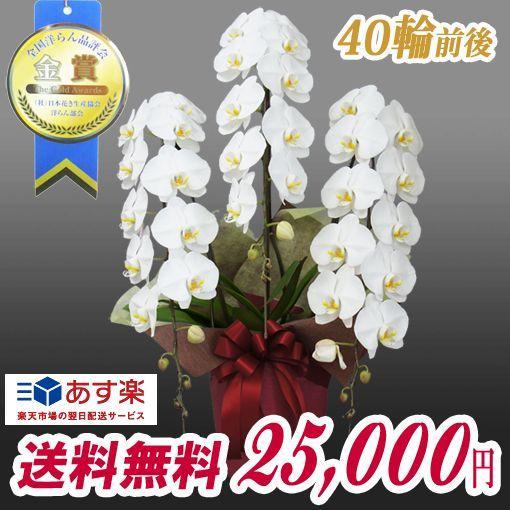 胡蝶蘭 大輪 3本立ち  25,000円 明日贈れる  選べる3色 白 ピンク 赤リップ  贈答用 お祝い ギフト お供え|kihana-shop