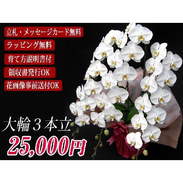 胡蝶蘭 大輪 3本立ち  25,000円 明日贈れる  選べる3色 白 ピンク 赤リップ  贈答用 お祝い ギフト お供え|kihana-shop|03