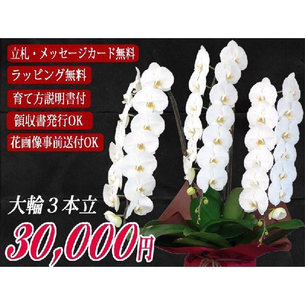 胡蝶蘭 大輪 3本立ち 30,000円 選べる3色 白 ピンク 赤リップ 明日贈れる  贈答用 お祝い ギフト お供え|kihana-shop|02