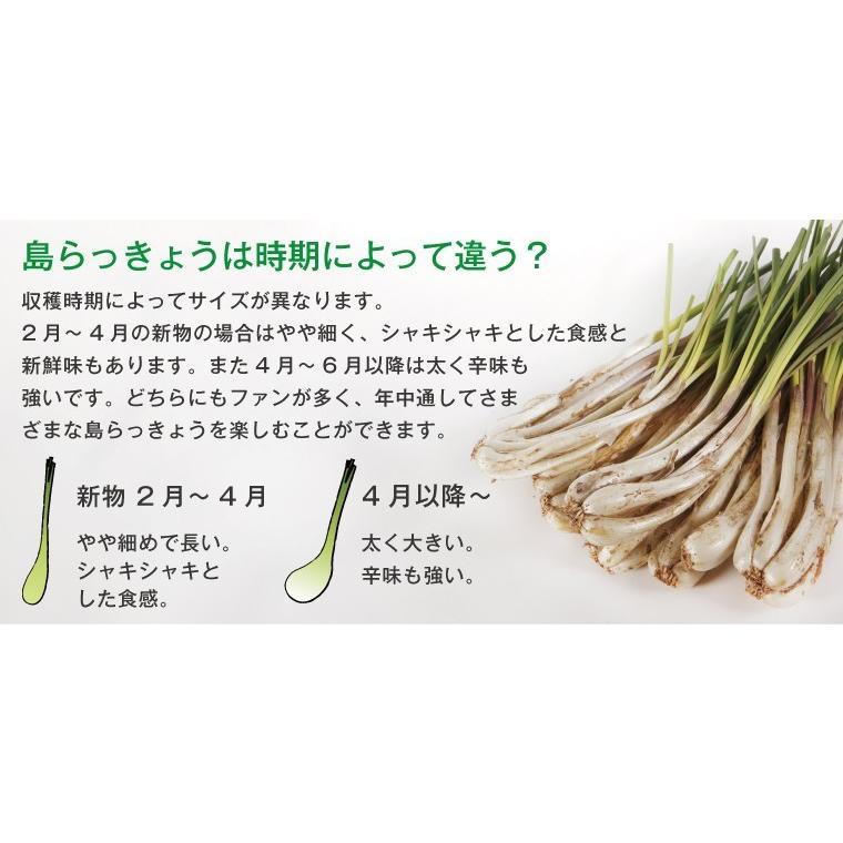 らっきょう 沖縄 漬物 ヨシおばぁの手作り 島ら。塩漬け 100g|kijimaya|05