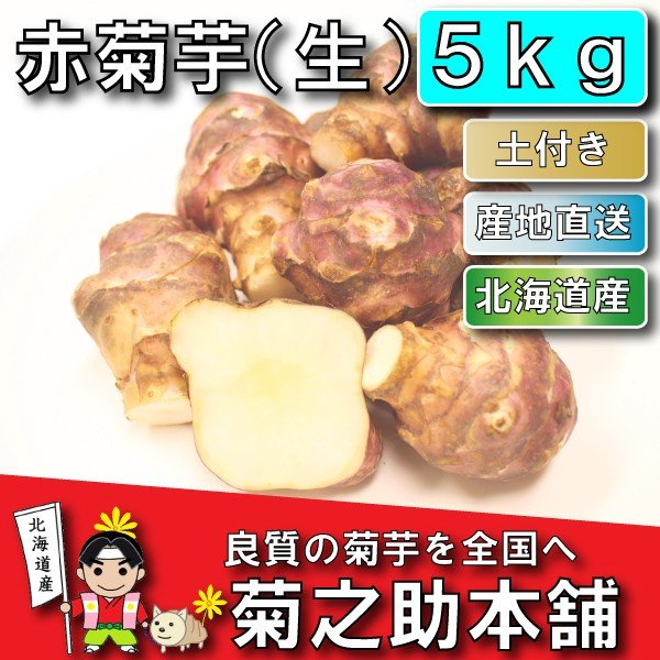 【11月上旬より発送予定】今話題の菊芋 北海道産 無農薬 化学肥料不使用 生 土付き 赤 5kg kikunosukehonpo