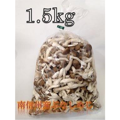 南信州産 カットぶなしめじ 1.5kg|kimurakinoko