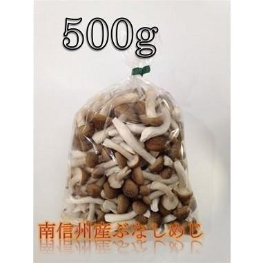 南信州産 カットぶなしめじ 500g kimurakinoko