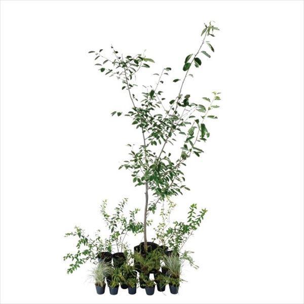 オンリーワン エントランス向け植栽セット ブリーゼ ジューンベリー やさしい景色 UN6-SET05|kiro|01