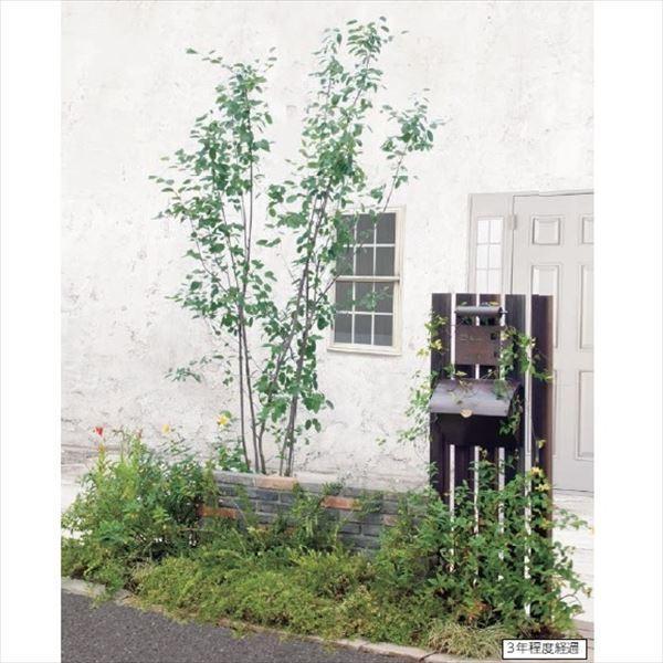 オンリーワン エントランス向け植栽セット ブリーゼ ジューンベリー やさしい景色 UN6-SET05|kiro|02