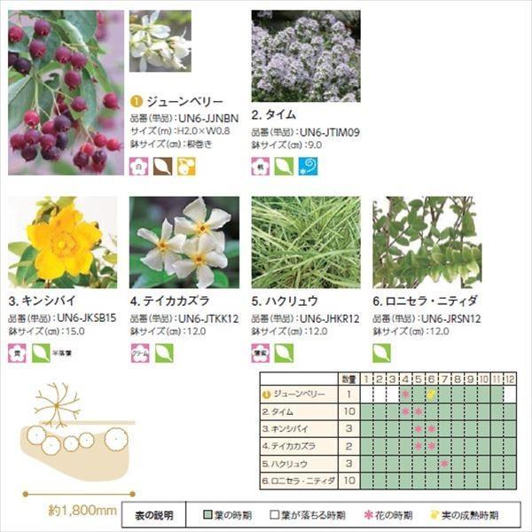 オンリーワン エントランス向け植栽セット ブリーゼ ジューンベリー やさしい景色 UN6-SET05|kiro|03